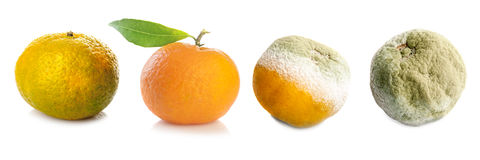 Four stages of tangerine Royalty Free Stock Image