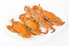 Four steamed crab Royalty Free Stock Images