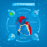 Four steps to healthy heart. Infographics about healthy heart. Healthy lifestyle. Structure of human heart Stock Photography