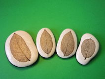 Four  stones with leaves skeletons Royalty Free Stock Image