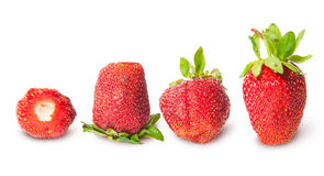 Four strawberries in a row Stock Images