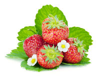 Four strawberry fruits with green leaves and flowers Royalty Free Stock Image