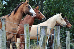 Four stunning different farm horses standing at fence line curiously watching people passing Royalty Free Stock Images