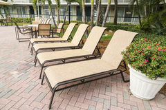 Four sun loungers by the poolwith palms.  Florida Stock Photos