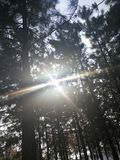 The sunlight rays shining through the branches of evergreen pine trees. The four sunlight rays shining through the branches of evergreen pine trees stock photography