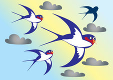Four swallows Stock Images