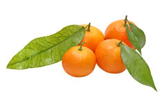 Four tangerines with green leafes.Isolated. Royalty Free Stock Images