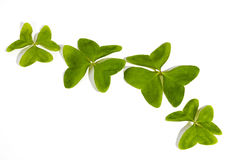 Four Three Leaf Clovers on White Background Royalty Free Stock Photography