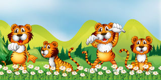 Four tigers in the flower field Royalty Free Stock Images