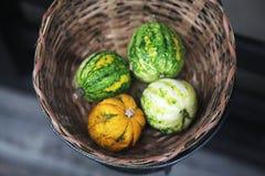 Four tiny pumpkins Stock Photo
