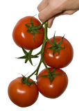 Four Tomato Stock Images