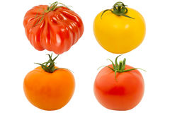 Four tomatoes Stock Images