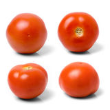 Four tomatoes againts white. Stock Images