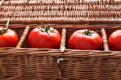 Four tomatoes with dew. Lying separately in wicker box stock photos