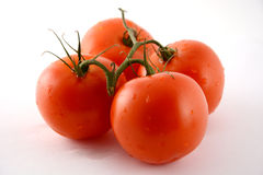 Four tomatoes on the green branch. The branch with four reds  tomatoes Royalty Free Stock Image