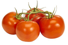 Four Tomatoes On A Vine Royalty Free Stock Photos