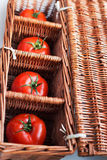 Four tomatoes in wicker box Stock Photography