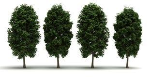 Four Tree Royalty Free Stock Photos