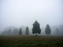 Four Trees in Fog Royalty Free Stock Image