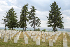 Four Trees Guard Tombstones Stock Images