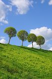 Four trees on the hill Stock Photography
