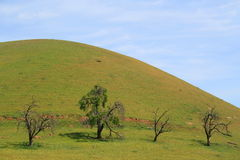 Four Trees On A Hilltop. Hilltop with a group of trees over blue sky Stock Image