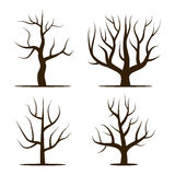 Four trees without leaves. Stock Photo