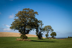 Four trees  Stock Photography