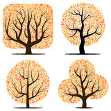 Four trees with yellow leaves Royalty Free Stock Photo