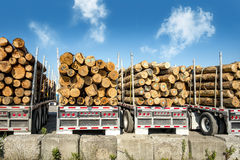 Four trucks transporting logs Stock Photo