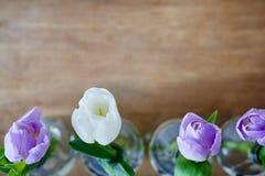 Four tulips closeup creative use focus Stock Photos