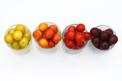 Four types of cherry-plums Royalty Free Stock Photo