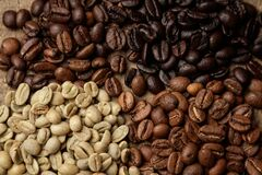Four types of coffee beans of different roast top view