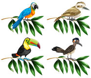 Four types of wild birds on branch Royalty Free Stock Photos