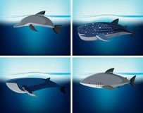 Four types of wildlife in the ocean. Illustration Stock Images