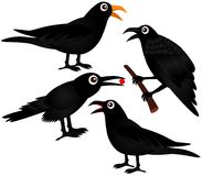 Four vector of Black Birds - Crows Stock Images