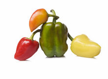 Four vegetables pepper on white background isolated Royalty Free Stock Photography