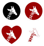 Four versions of giraffe head Royalty Free Stock Images