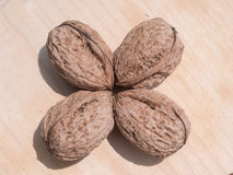 Four walnuts. Positioned on a wooden plate. The walnuts are positioned with the pointy face towards the middle of the group Stock Image