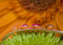 Four water drops Royalty Free Stock Photo