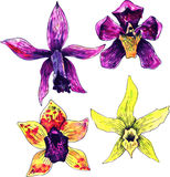 Four watercolor drawing orchids Royalty Free Stock Photos
