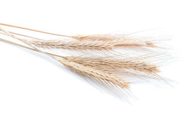 Four wheat ears Stock Images