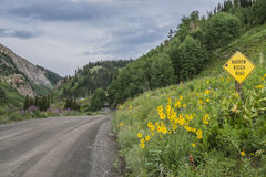 Four Wheel Drive Road In Colorado. A landscape of a four wheel drive road in Colorado's mountains with flowers and narrow rough road sign Stock Photo
