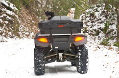 Four Wheeler and Dogs in Snow Stock Photo