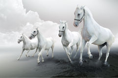 Four white horses Royalty Free Stock Photo