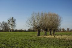 Four willows on the meadow. Four willows on the green meadow stock photo