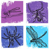 Four windows with insect Stock Image