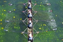 Four Womens rowing team on blue lake. Aerial view stock photography