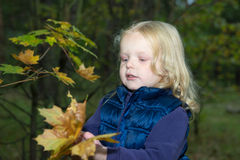 Four-year girl playing with autumn leaves Royalty Free Stock Photography