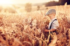 A little boy farmer is standing in the field of grain. stock image